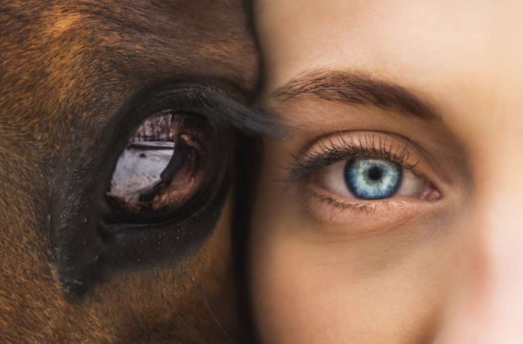 Photo of human eye and horse eye